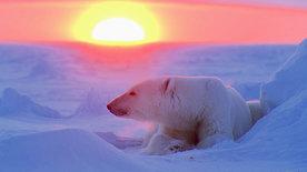 Die Spur des Bären