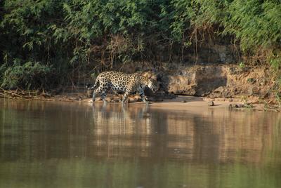 Wilde Inseln: Amazonas