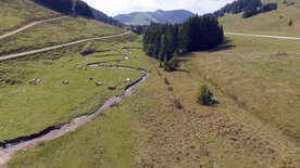 Arbeit auf der Alm - In den steirischen Alpen