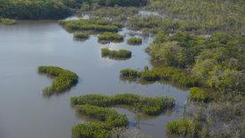 Zu den Quellen des Essequibo (3/5)