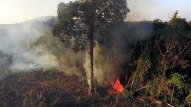 wissen aktuell: Rettet die Wälder!