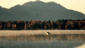 Der Längsee - Paradies für Geist und Gaumen