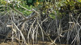 Zu den Quellen des Essequibo (1/5)
