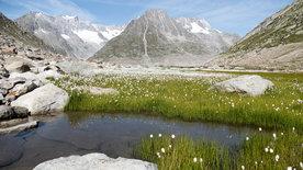 Unsere wilde Schweiz