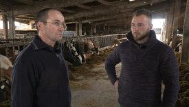 Burn-out im Stall? Milchbauern in der Krise