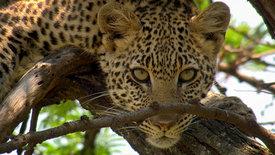 Beeindruckende Tierwelt: Im Grasland