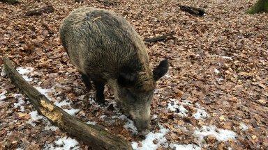 Terra Xpress - Vorgarten-schweine Und Die Brücke Mit Tücke