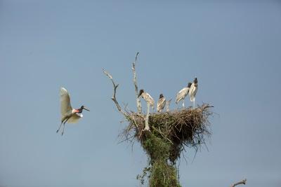 Wildes Pantanal (1/2)