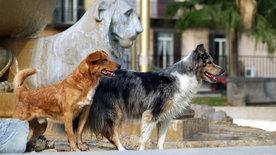 Bartolo, der Streuner - Ein Hundeleben in Neapel
