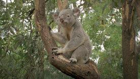 Beeindruckende Tierwelt: In den Wäldern