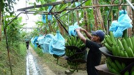 Reisen in ferne Welten: Costa Rica