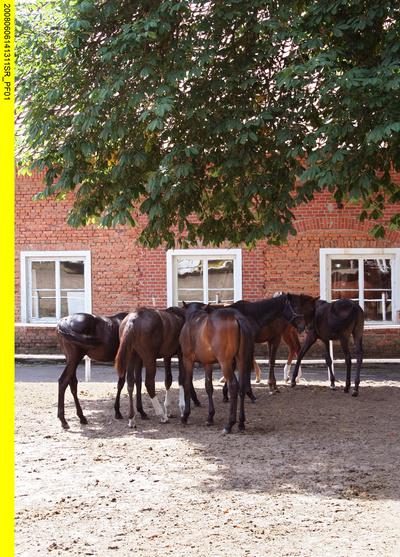 Reisewege: Land der edlen Pferde