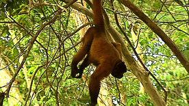 Die Affenbande vom Amazonas
