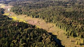 Europas Urwälder: Bialowieza - Heimat der Wisente