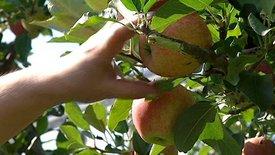 Der Biss der Erkenntnis - Geschichten vom Apfel