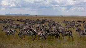 Die Tierärzte vom Kilimanjaro (2/3)