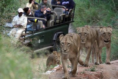 Die Magie des Leoparden -<br/>Ökotourismus in Südafrikas Wildreservaten