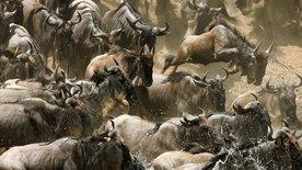 Serengeti (2/2)