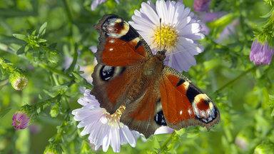 Planet E. - Planet E.: Ausgebrummt - Insektensterben In Deutschland
