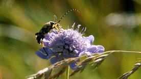 Von Insekten und Landwirten – Können wir die<br/>Biodiversität retten?