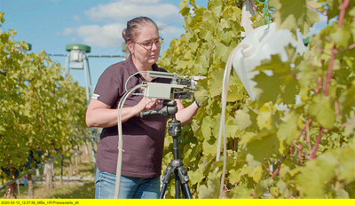 Hessenreporter: Weinbau im Klimawandel