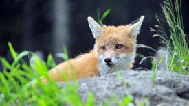 Unter Wölfen, Bären und Geiern -<br/>Ein Jahr im Wildpark Mautern