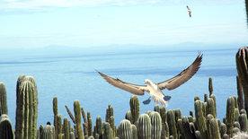 Baja California - Das andere Kalifornien