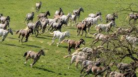 Weiße Pferde, blaue Reben - In der Heimat der<br/>Lipizzaner und des Schilchers