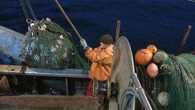 Einmal Fischer, immer Fischer