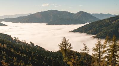 Roseggers Waldheimat - Ein Jahr im Zauberwald