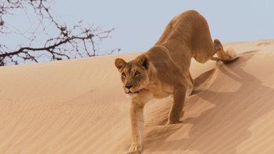 Terra X Dokumentationen Und Kurzclips - Eine Erde - Viele Welten: Wüsten