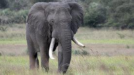 Im Reich der Königselefanten - Das Tembe-Wildreservat<br/>in Südafrika