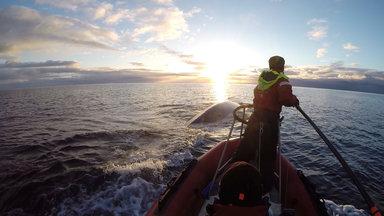 Planet E. - Rettung Der Wale - Rettung Der Meere