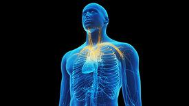 Das Immunsystem: Stark, sensibel, steuerbar