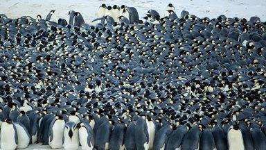 Terra Xpress - Magische Schwärme Und Kuschelnde Pinguine