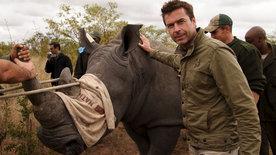 Steffens entdeckt: Südafrika