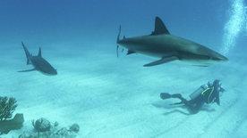Die Haischule