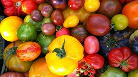 Beates bunte Tomaten