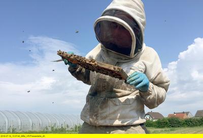 Hessenreporter: Der Wanderimker - Bienen für die Bauern