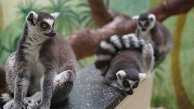 Planet E. - Planet E. Pandemie: Der Handel Mit Exotischen Wildtieren