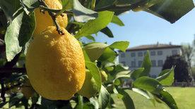 Wo die Zitronen blüh'n - Eine süßsaure Reise<br/>von den Alpen bis Sizilien