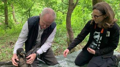 Terra Xpress - Tatort Wildnis: Tierretter Im Einsatz