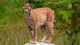 nano: Vom Wirtschaftswald zum  Urwald -<br/>50 Jahre Nationalpark Bayerischer Wald