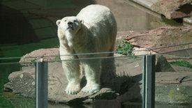 """""""Einstein""""-Spezial: Wozu braucht es heute noch Zoos?"""