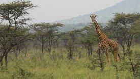 Ruanda - Perle Zentralafrikas