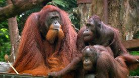 Beeindruckende Tierwelt: Im Dschungel