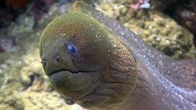 Beeindruckende Tierwelt: Im Meer