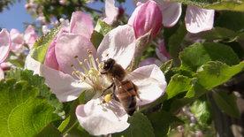 NETZ NATUR: Die Frage der Bienen